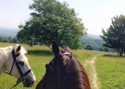 Riding School Hacking Mount Harry South Downs Lewes Sussex image