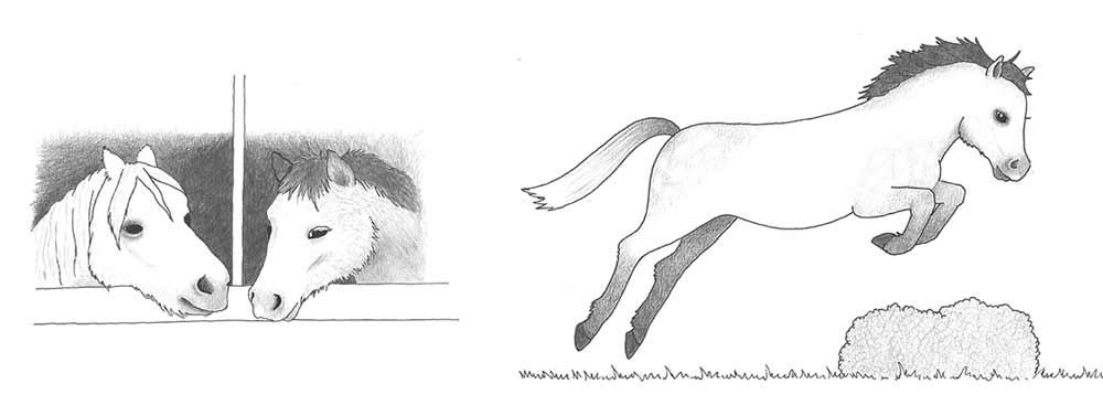 Lucy Postgate Miranda Illustrations image