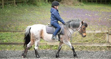 Horse Riding tuition image